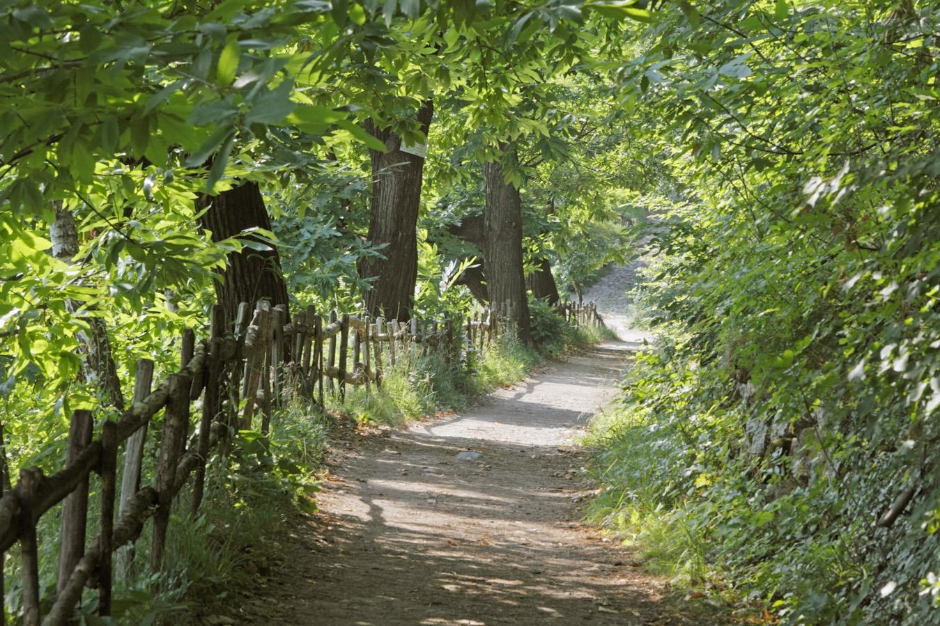 Lana e dintorni Waalwege sentiero ©MG Turismo ecosostenibile a Lana e dintorni, dove la natura è un'opera d'arte.